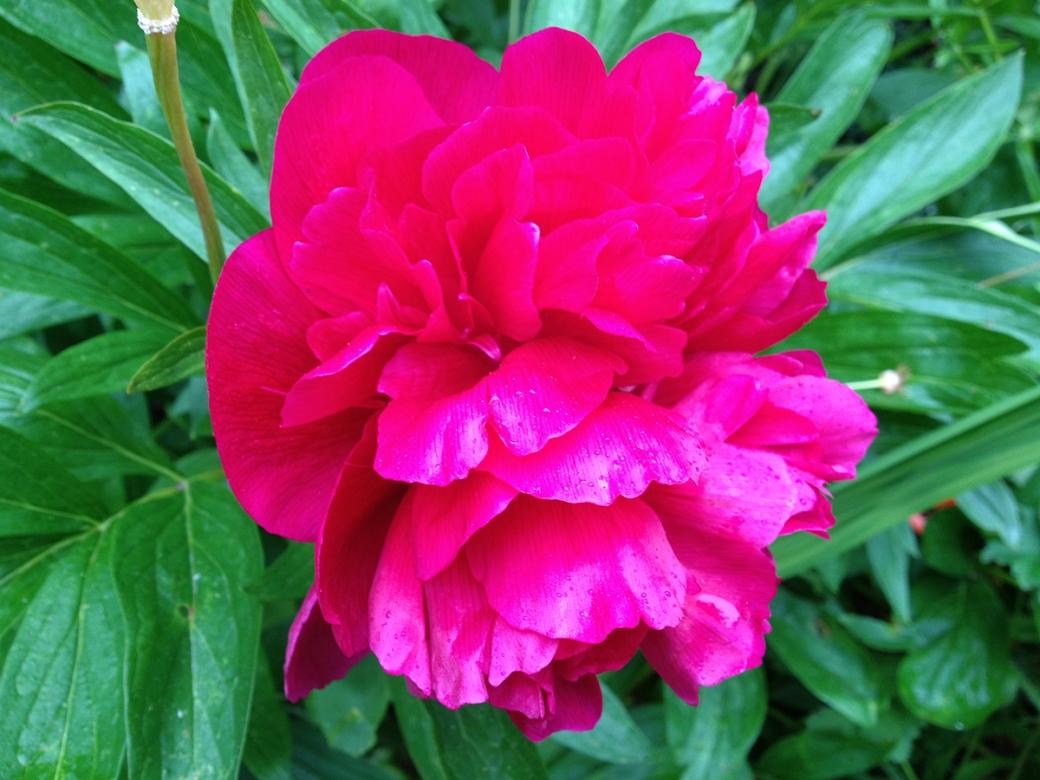 serenarts gallery flowers