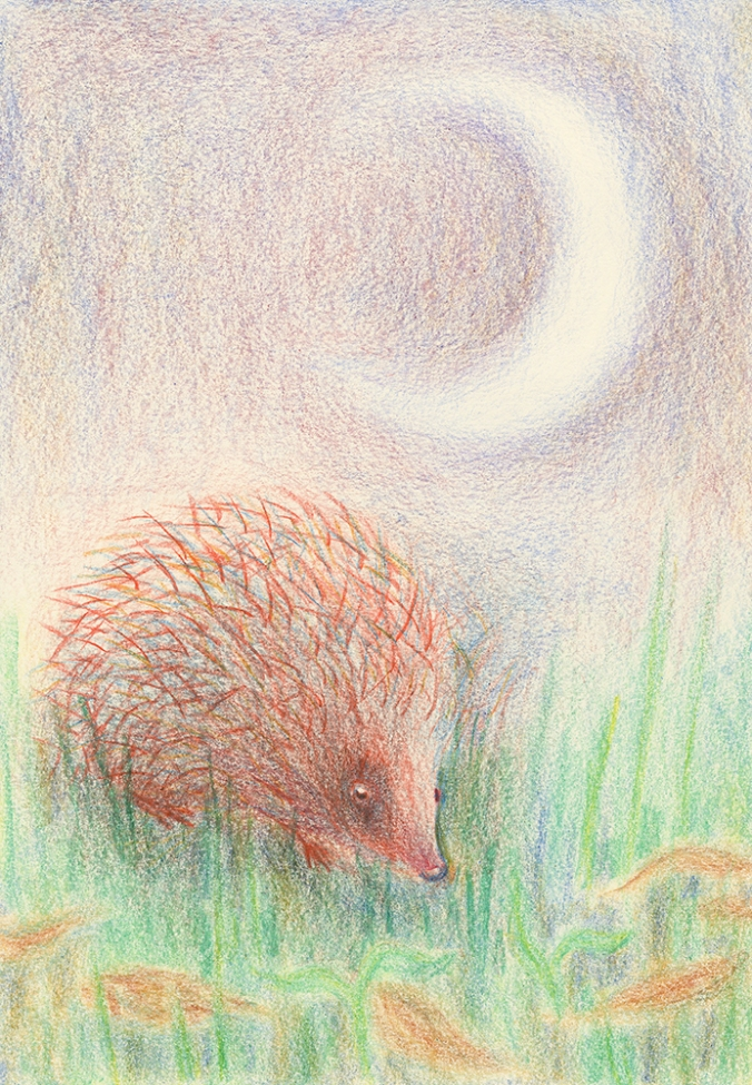 pastel drawing of hedgehog by derek fuller