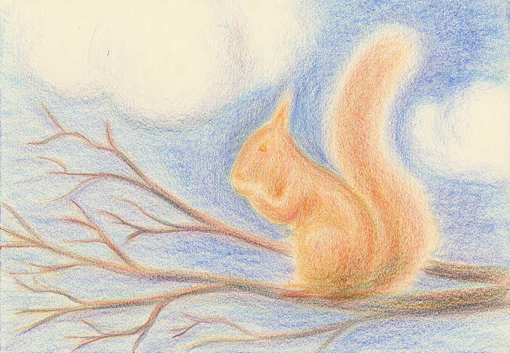 pastel drawing of Squirrel  by derek fuller