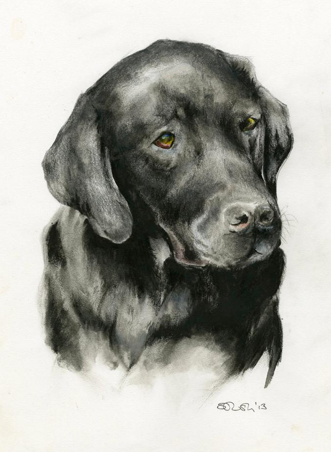 Charlie the black labrador - pet portrait by Serena Pugh of SerenArts Gallery