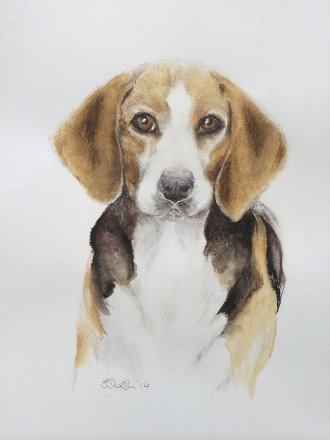 A pet portrait by Serena Pugh