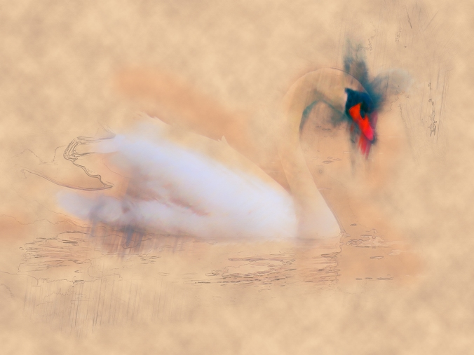 serene swan by serena pugh
