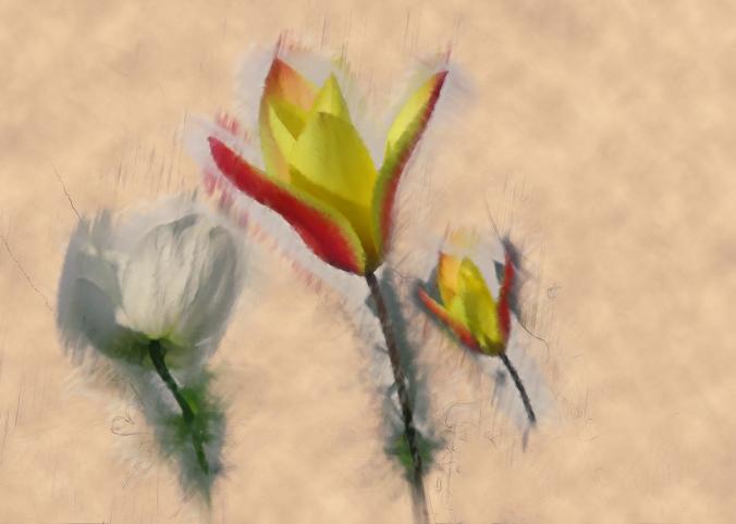 serena pugh photographic art