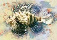 'Lionfish'