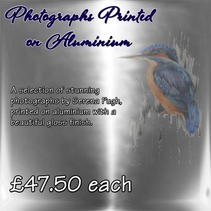 serena-pugh-photographs-on-aluminium