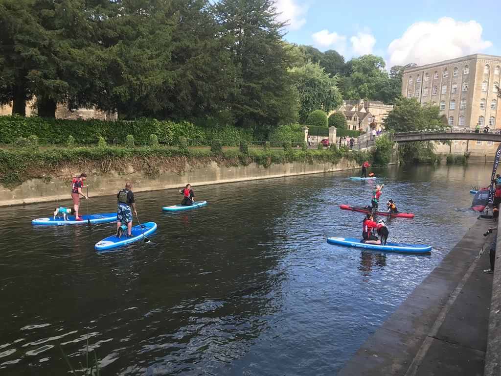 doggy paddle on the river avon, bradford on avon